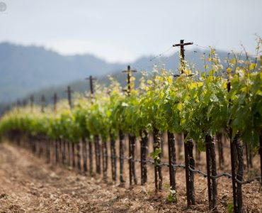 Remove term: Amazing Wineries in the USA Amazing Wineries in the USA